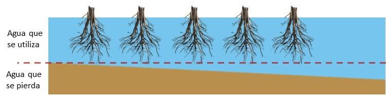 Distribución de agua en riego y eficiencia